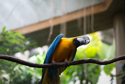 Macaw in Central Park Zoo