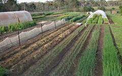 Allsun farm