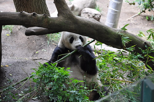 2012-04-23 - San Diego Zoo 341 by robj_1971