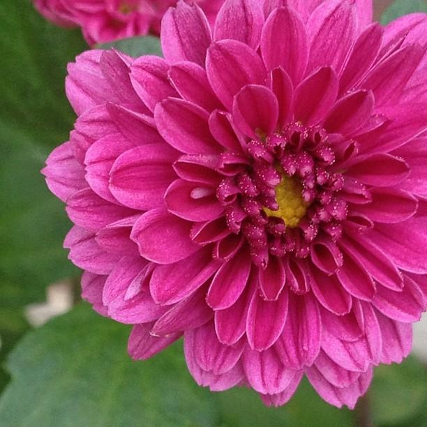 Tiny Bloom