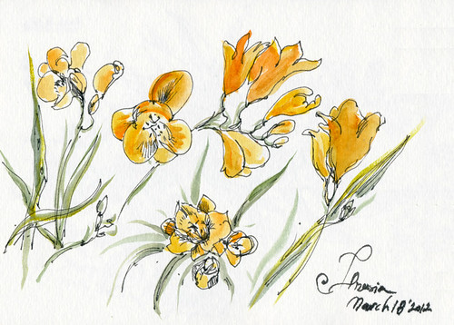 March 2012: Freesia by apple-pine