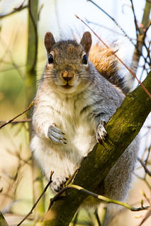 Oi! You with the camera. Get me some nuts