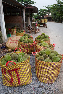 Freshly Harvested Durian Delivered to Mekong Delta Wholesaler