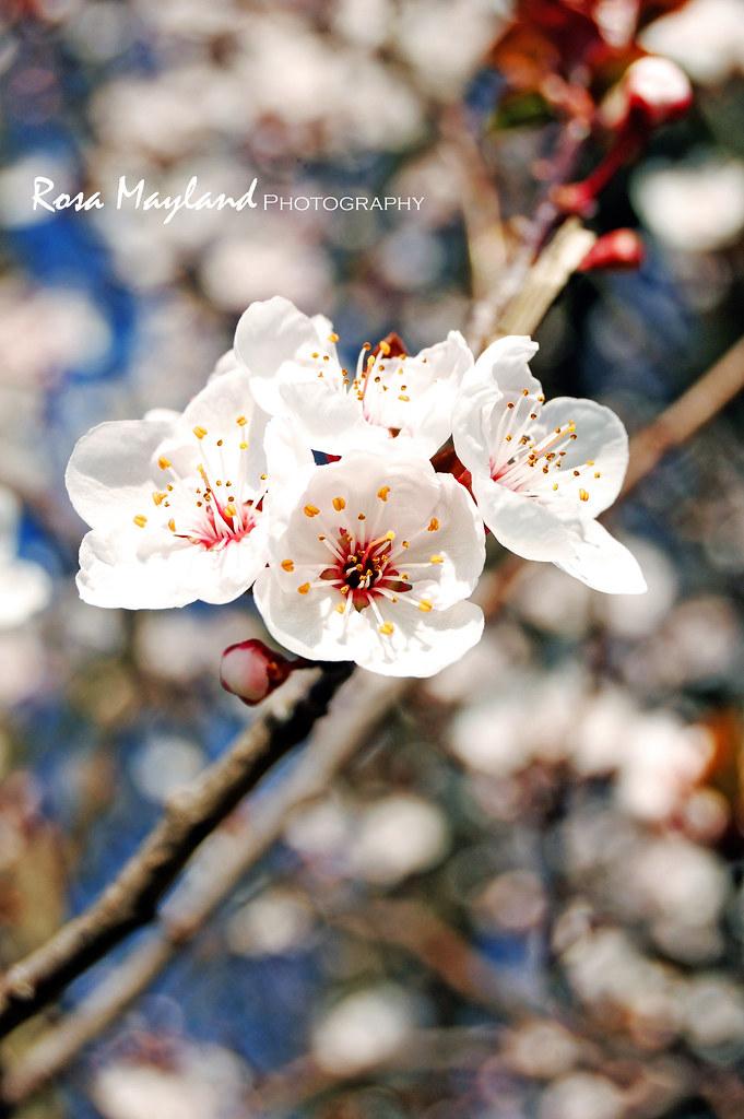 Spring Flowers 4 2 bis