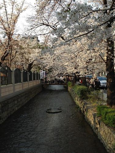 木屋町の桜並木
