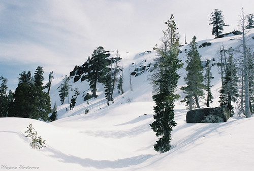 Another Sierra Snow Scene