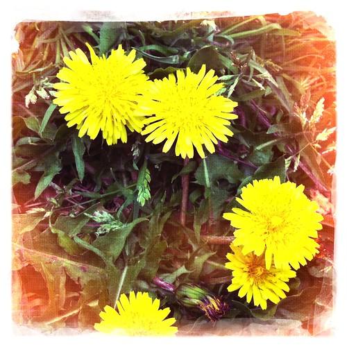 Flower05 #hipstamatic