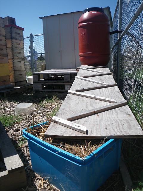 honey bee rain barrel drinking system