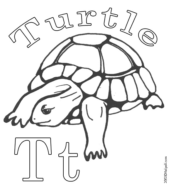 color-t-turtle
