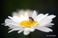 Photo by flower macro