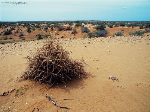 road day desert uzbekistan nukus