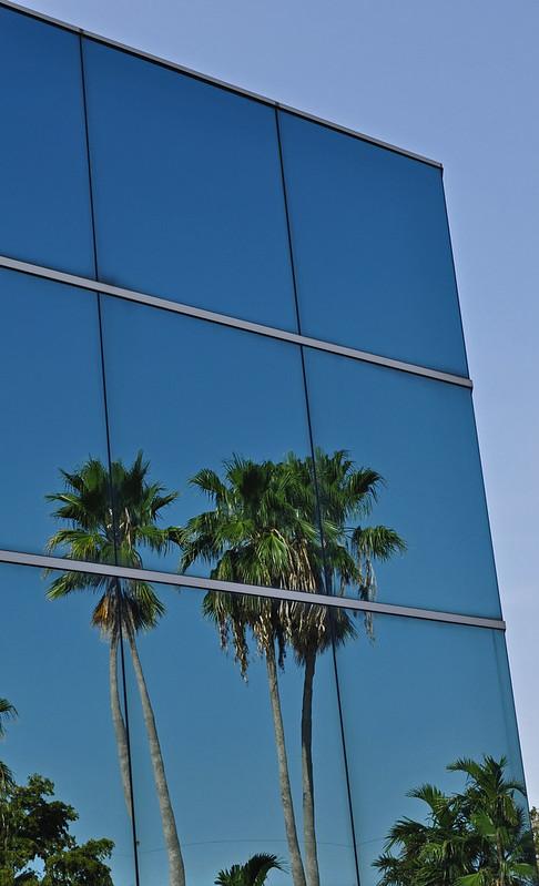 Mirror Palms (3)