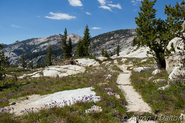 Trail Through Flowers