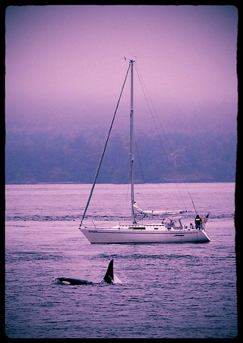 07-15-12 Whale Watching by roswellsgirl