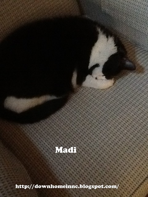 Madi Competitive Napping