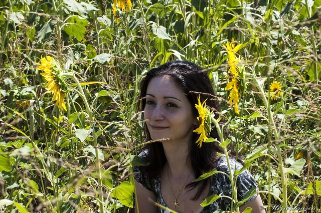 Printre floarea soarelui