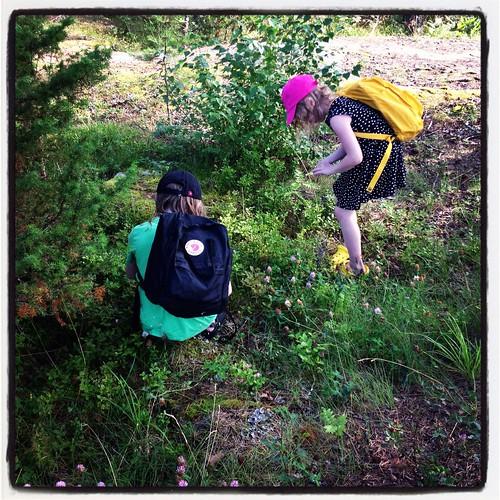 Viggo och Klara plockar blåbär