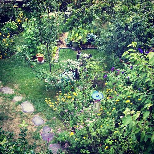 August 1 garden #organicgarden #urbangarden #Lughnasadh #Maine