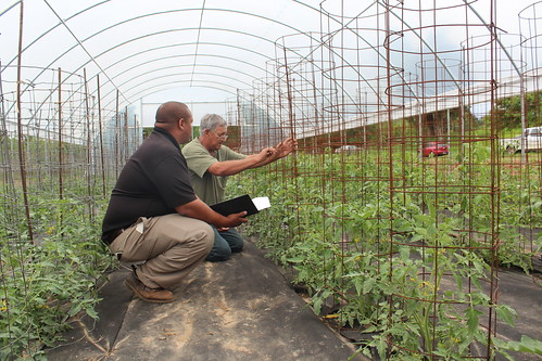 NRCS Supervisory District Conservationist Kelvin Jackson helped tomato producer Danny Daniels expand his farm and make it more environmentally friendly.