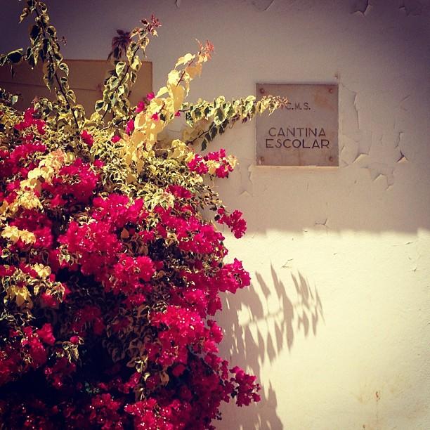 Já com saudades. Cantina escolar em Armação de Pêra, #algarve, #portugal