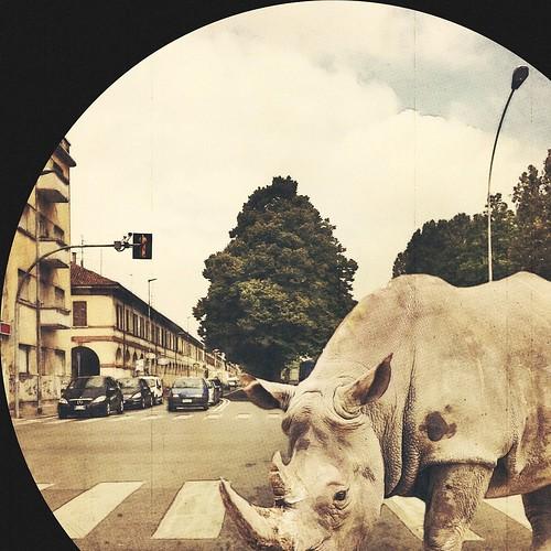 safari street parade (every rhino needs a zebra)