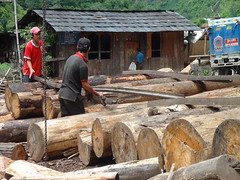 Unsustainable timber extraction in Bhutan