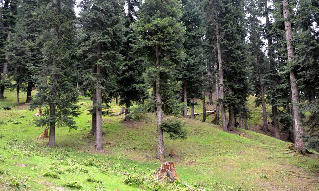 Yusmarg - Kashmir_2012_07_20_3709_