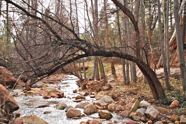 Winter, nature, creek, natural light photography