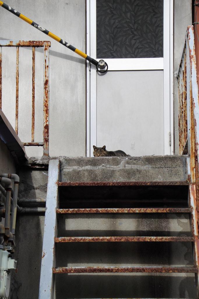 階段と猫 1