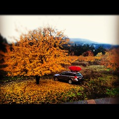 Fall Photo of the Day: Hood River
