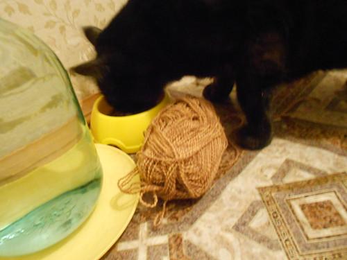 кот питается рядом с мотком