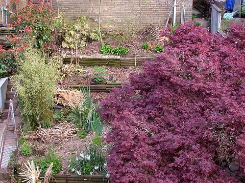 Late April garden