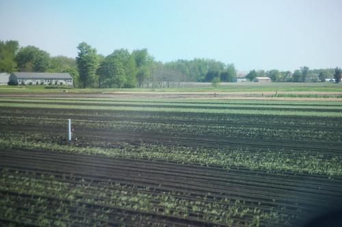 ohio farm farming firelands stateroad103