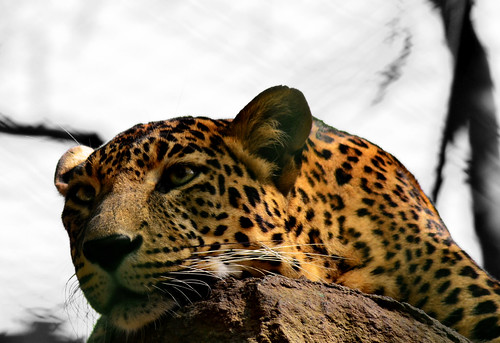 Resting - Bannerghatta National Park - Weekend Tour Bangalore