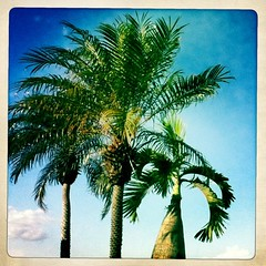 week 14, 2012: summer palm!