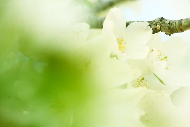 Sakura 2012-21