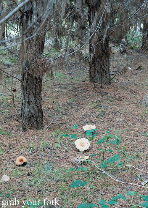 wild mushroom picking near oberon