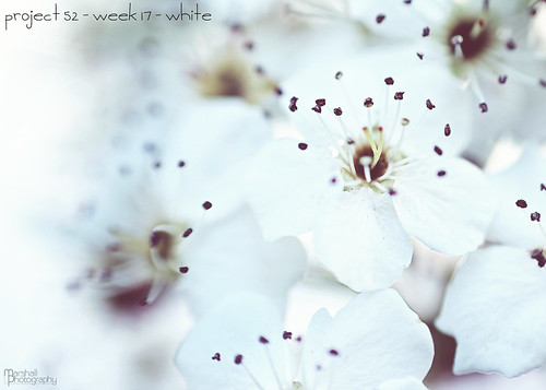 Project 52 - Week 17 - White