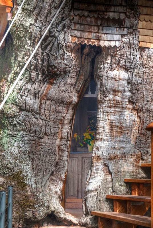 oak-chapel