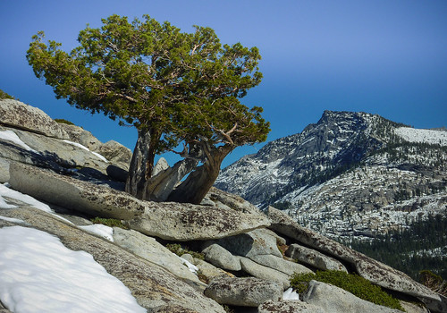 The simple beauty of Yosemite National Park