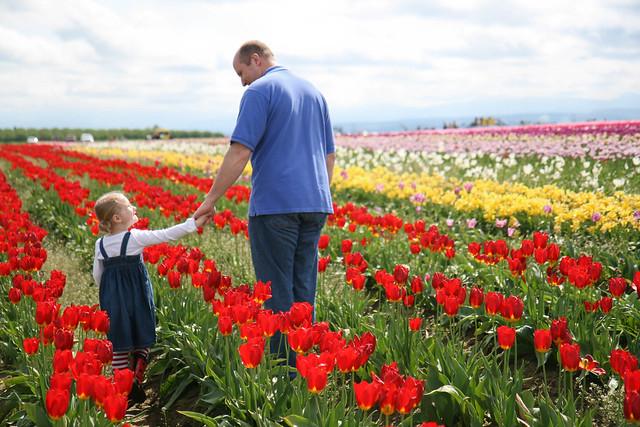 tulip festival-12