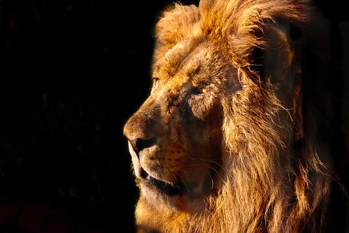 A gentle king