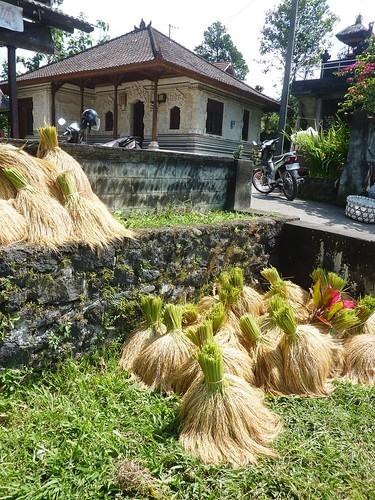 Bali-Route Legian-Jatiluwih (81)