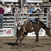 Bronc Riding from the Red Lodge Rodeo