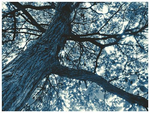 ss-tree