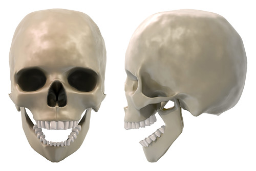 skull front and side j...