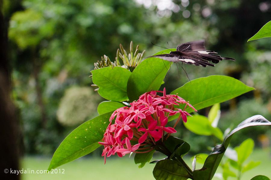 Zoological & Botanical Gardens
