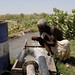 A Fresh Crop: Exciting Environmental Initiatives Take Hold in Northern Sudan