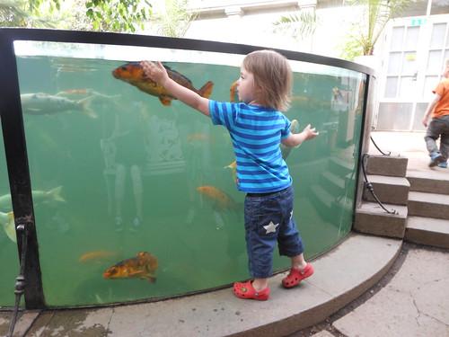 Ava tittar på fiskar och jag passar på att sitta på bänken...