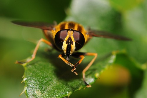 Hoverfly washing down by Andy Pritchard - Barrowford